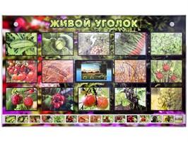 """Комплект оборудования """"Живой уголок"""" (растения) с тифлопереводом и сурдокомментариями"""